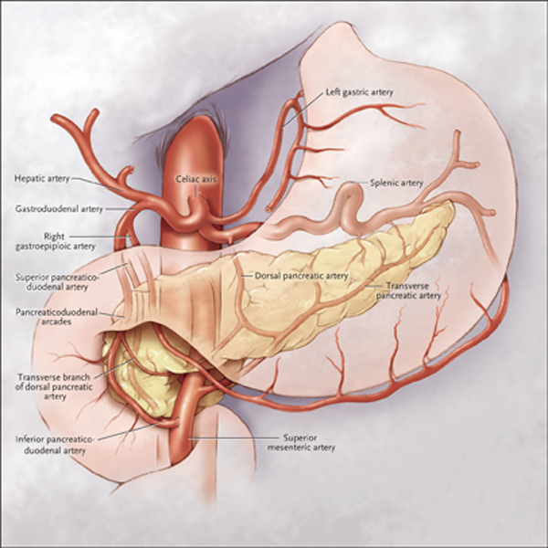 Celiac Axis and Pancreaticoduodenal Arcades and Dorsal Pancreatic Artery