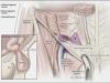 anatomicalImage18
