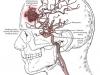 anatomicalimage12