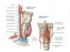 anatomicalimage2