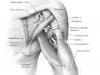 anatomicalimage3