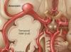 anatomicalimage6